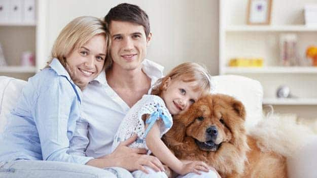 Wills & Trusts dog-young-family Direct Wills Wigston